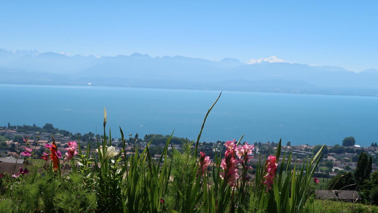 Mont Blanc 16.9