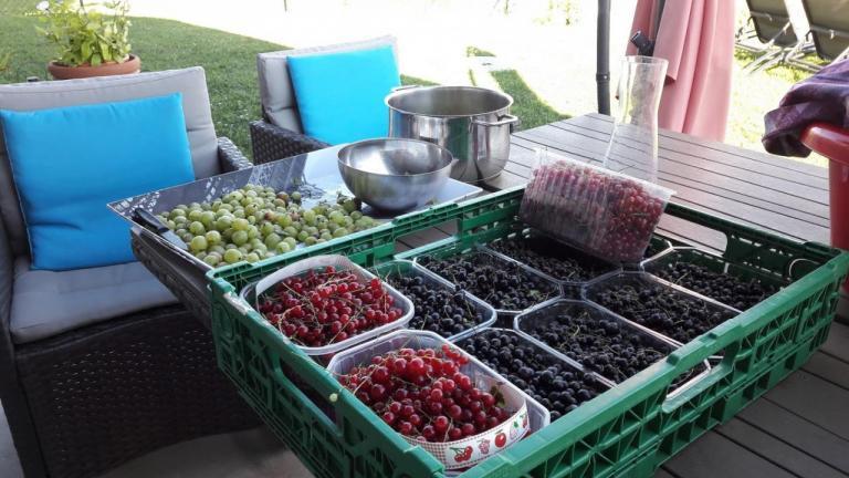 recolte des baies du jardin
