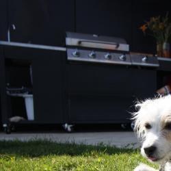 Avec le chien de garde